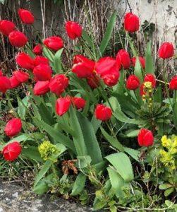 Gardening Blog 1
