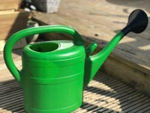 Gardening Blog 6