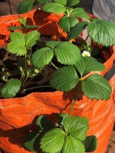 Gardening Blog 8