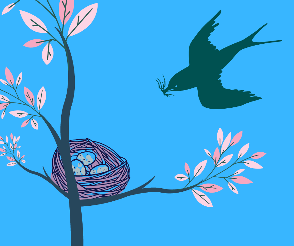 Spring Blog 5 Bird's Nest