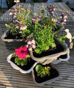 Garden June 1